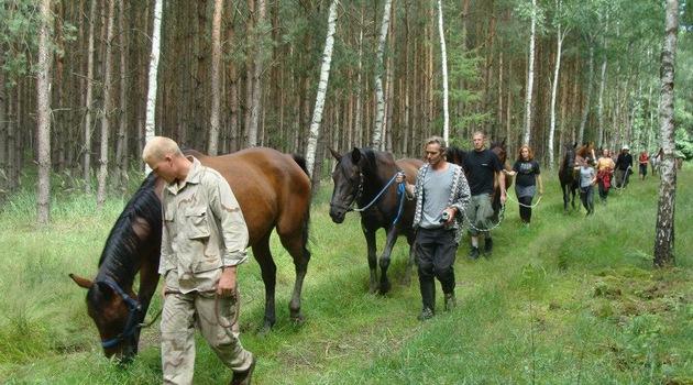 pferde aus tierheim