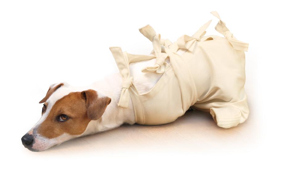 Stop Drapaniu żeby Nasz Pies Przestał Się Drapać Www