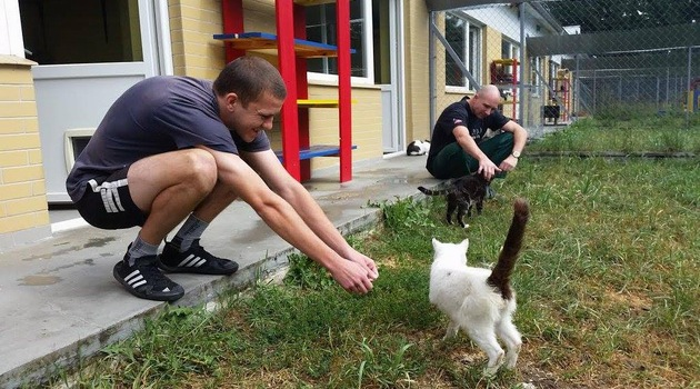 how to help homeless animals
