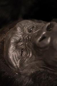 Ewolucja duszy - wykład prof Andrzeja Elżanowskiego
