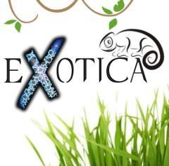 EXOTICA - giełda zwierząt egzotycznych w NOT