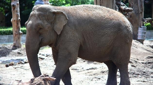 Dzień Dziecka w zoo