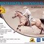 VIII Otwarte Mistrzostwa Dolnego Śląska w Jeździe Western