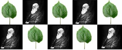Dni Darwina na UWr