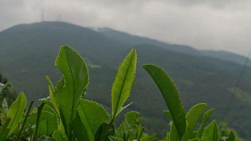 Warsztaty z wiedzy o herbacie w Family Cafe