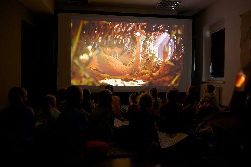 """Kino w Konturach dla dzieci """"Gang wiewiórek"""""""