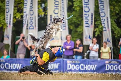 Zawody latających psów Dog Chow Disc Cup