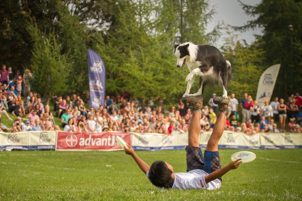 Latające psy we Wrocławiu