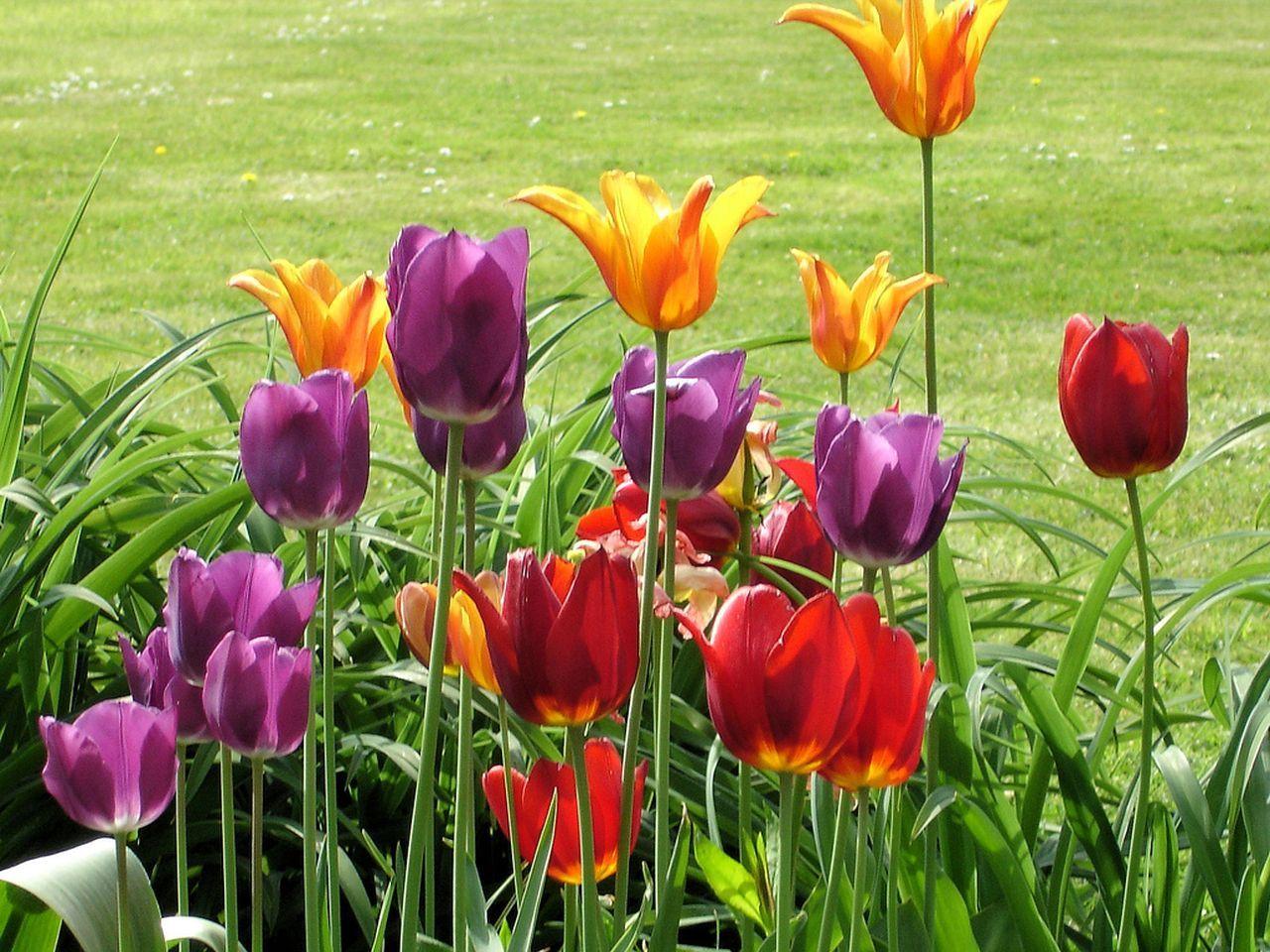 """""""Barwny świat kwiatów – nie tylko dla kobiet"""" - zajęcia plastyczne dla dzieci 6-12 lat"""