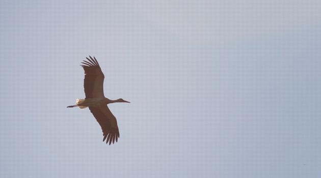 Imprezy dla ornitologów-pasjonatów