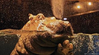 Afrykarium we wrocławskim Zoo godz. 9.00-20.00, ostatnie wejście o 19.00, pozostałe pawilony w zoo otwarte do 16.00  Pierwsze w Polsce oceanarium prezentujące faunę Czarnego Lądu jest integralną częścią wrocławskiego ogrodu zoologicznego.      Morze