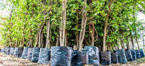 Rozdajemy drzewka na Światowy Dzień Drzewa