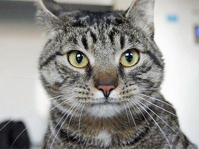 Kot na Trójkącie – piknik