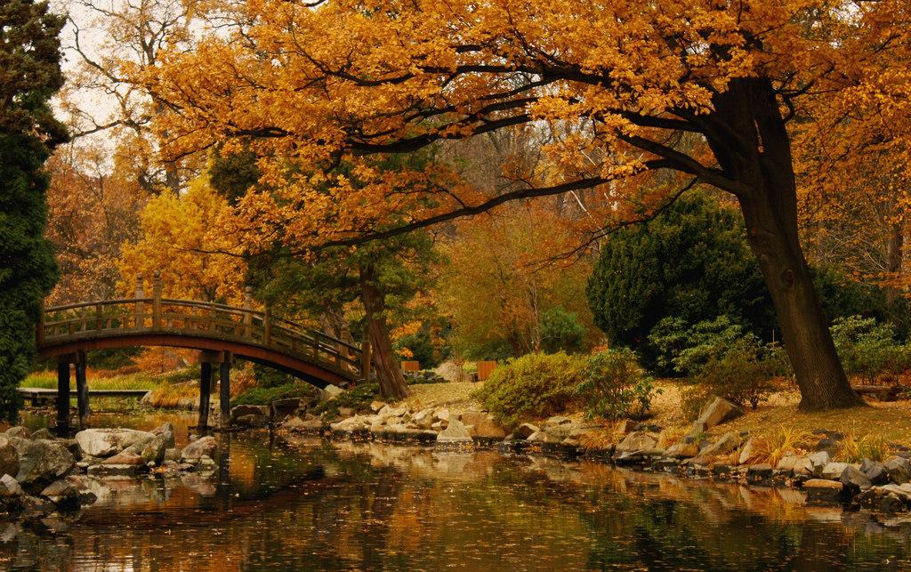 Spacery z przewodnikiem – Park Szczytnicki w jesiennej aurze