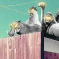 Zwierzaki na dachu – impreza przebierana