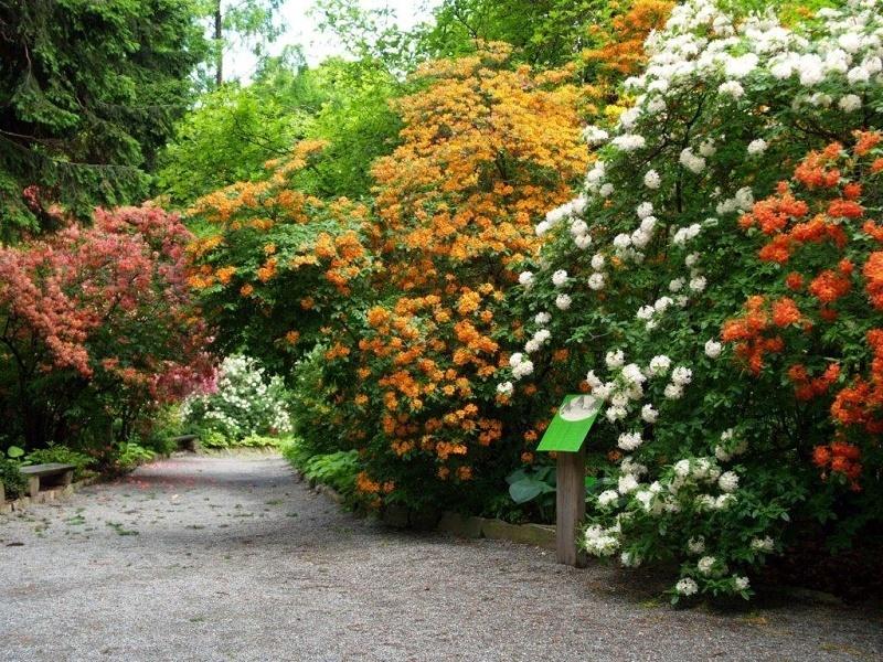 Urodziny Arboretum W Wojsławicach Wwwwroclawpl