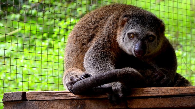 Fot. Zoo Wrocław