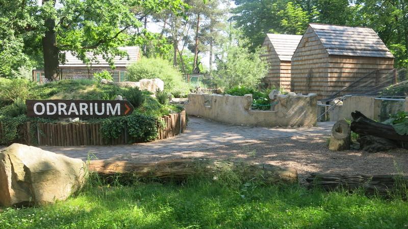 Nowy wybieg dla wydr powstanie tuż przy wejściu do Odrarium, Fot. Bartosz Moch