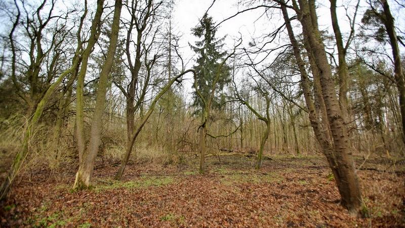 Las Osobowicki we Wrocławiu